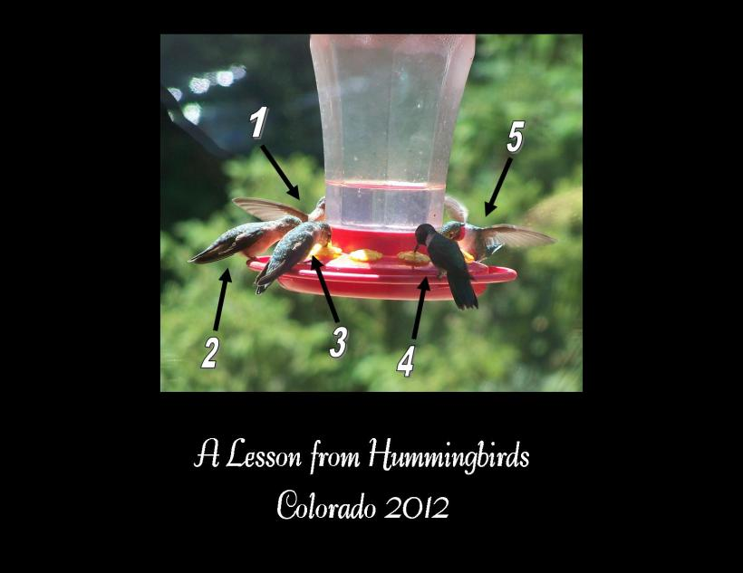 Hummingbirds try 2