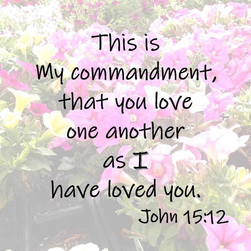 John 15 12