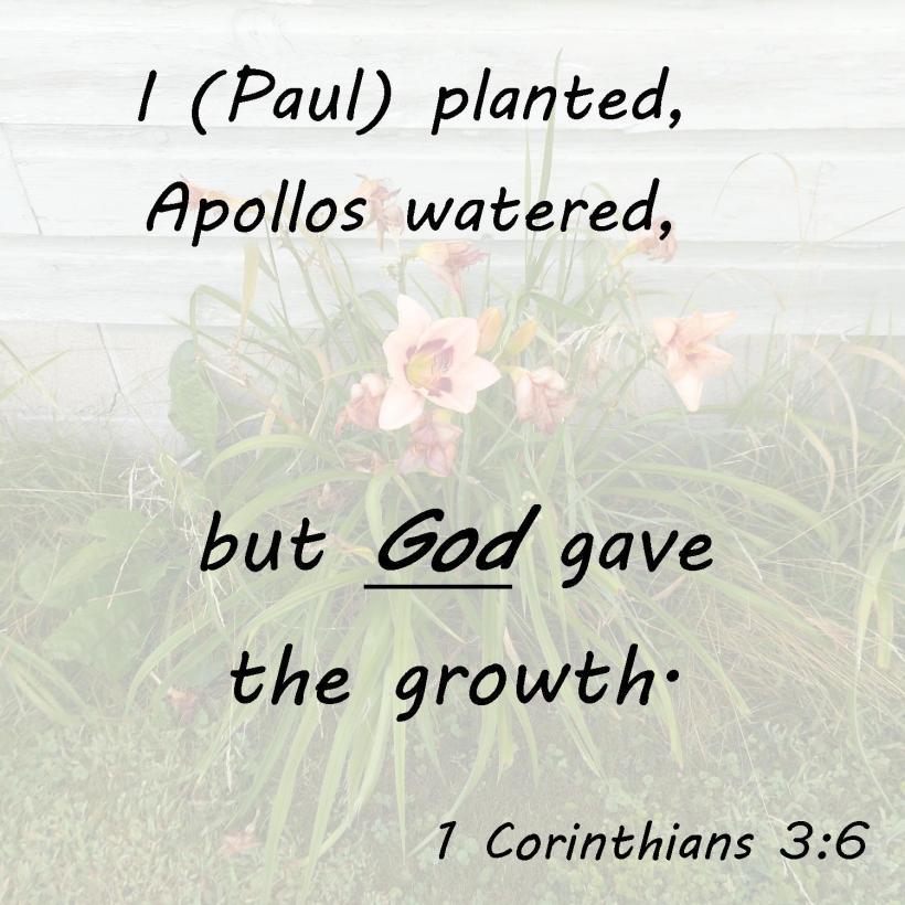 1 Corinthians 3 6
